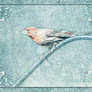 House Finch With Colored Sketch Effect Poster
