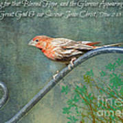 House Finch With Verse Poster