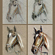 How To Draw A Horse Portrait Poster