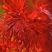 Hubble Galaxy With Red Maple Foliage Poster