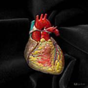 Human Heart On Black Velvet Poster