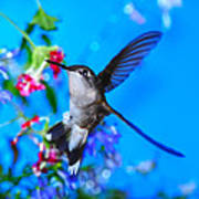 Hummer And Flowers On Acrylic Poster