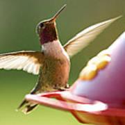 Humming Bird 2 Poster