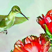 Humming Bird And Cactus Flowers Poster