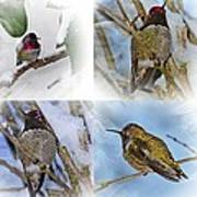 Humming Bird And Snow 4 Pack Poster