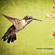 Humming Bird In Flight Poster