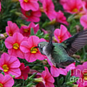 Hummingbird 3219 Poster