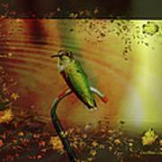 Hummingbird At The Pond Poster