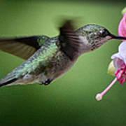 Hummingbird Carbs Poster