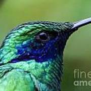 Hummingbird Closeup Poster