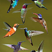 Hummingbird Collage Poster