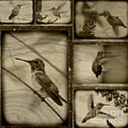 Hummingbird Family Portraits Poster