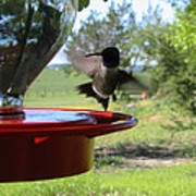 Hummingbird Flying To The Feeder Poster