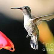 Hummingbird Happiness Poster