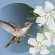 Hummingbird Heaven Poster by Bonnie Barry