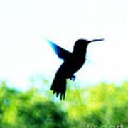 Hummingbird Hover Poster
