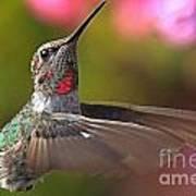 Hummingbird Intensity Poster