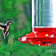 Hummingbird Love Poster