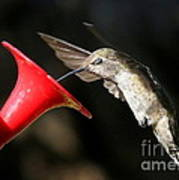 Hummingbird Sigh Poster