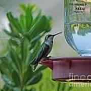 Hummingbird Still Life Poster