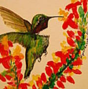 Hummingbird With Red Flowers Poster