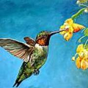Hummingbird With Yellow Flowers Poster