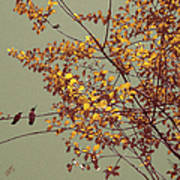 Hummingbirds On Yellow Tree Poster