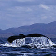 Hump Backed Whale Tail With Cascading Water Poster