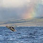Humpback Whale And Rainbow Poster