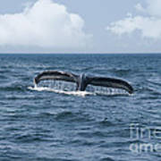 Humpback Whale Fin Poster