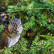 Hungry Chipmunk  Poster