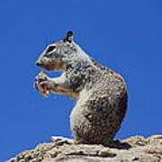 Hungry Ground Squirrel Poster