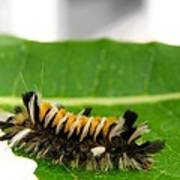 Hungry Hairy Caterpillar Poster