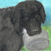 Hungry Newfoundland Dog Canine Animal Pets Art Poster