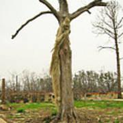 Hurricane Katrina Resurrection Tree Poster