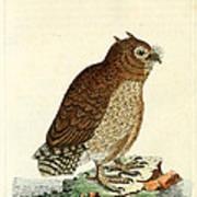 Hutum Owl  Poster