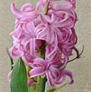 Hyacinth Pink Poster