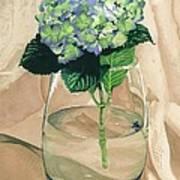 Hydrangea Blossom Poster