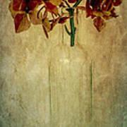 Hydrangea Poster by Elena Nosyreva