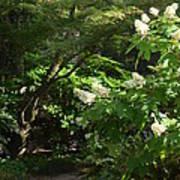 Hydrangea Path Poster