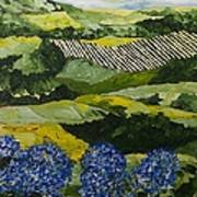 Hydrangea Valley Poster