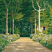 Hydrangeas On A Garden Path Poster
