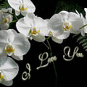 I Love You Greeting - White Moth Orchids Poster