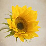 I See Sunshine Poster