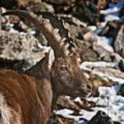 Ibex Pictures 160 Poster