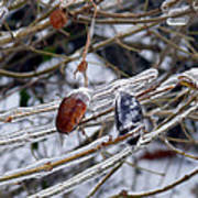 Ice Incased Leaves Poster