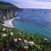 Ice Plants On Big Sur Coast Poster
