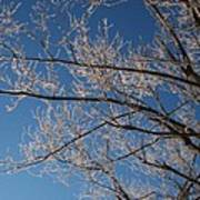 Ice Storm Branches Poster
