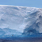 Iceberg With Cape Petrel Poster