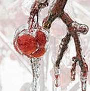 Iced Red Cherries Poster